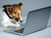 Hund am Laptop | © Bildagentur PantherMedia / damedeeso